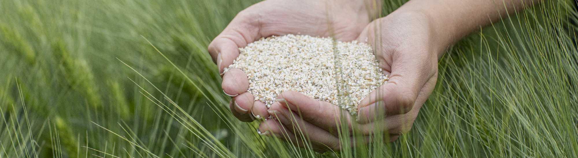 ohrapelto barley field